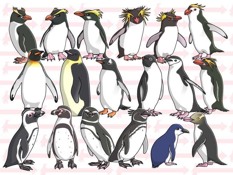 penguin-all-OW